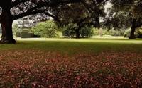 Autumn leaves in the garden wallpaper 1920x1200 jpg
