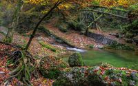 Autumn leaves in the mossy forest wallpaper 2560x1600 jpg