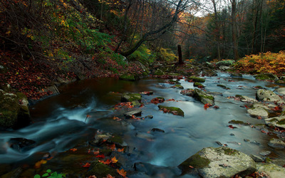 Autumn leaves in the mystic mountain river wallpaper