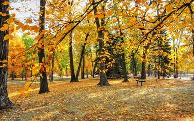 Autumn leaves in the park Wallpaper