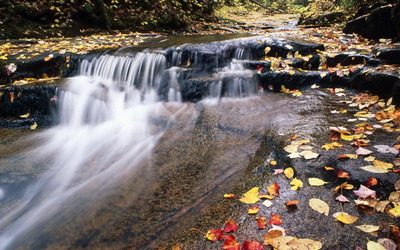 Autumn leaves in the waterfall wallpaper