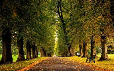 Autumn leaves on the park path wallpaper