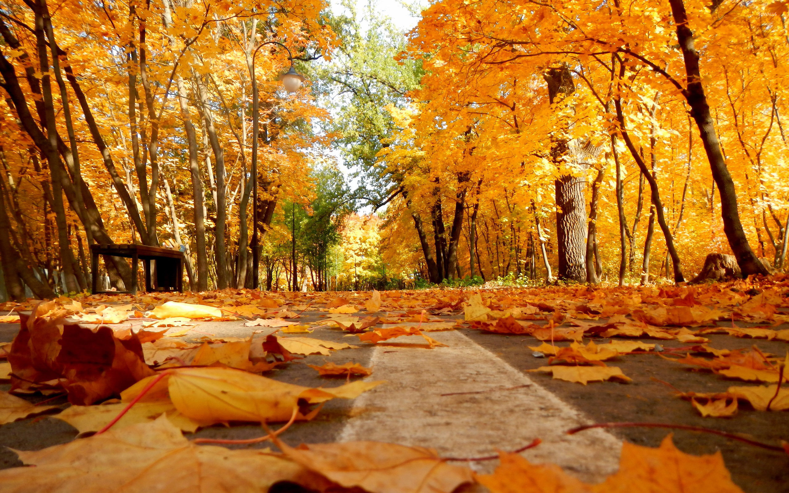 Autumn leaves on the park path wallpaper Nature wallpapers