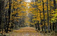 Autumn leaves path through the forest wallpaper 3840x2160 jpg