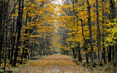 Autumn leaves path through the forest wallpaper