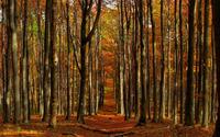 Autumn path through the forest wallpaper 1920x1200 jpg