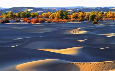 Autumn trees by the dunes wallpaper