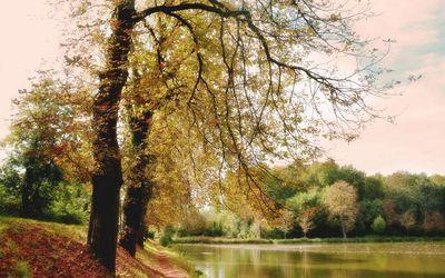 Autumn trees guarding the lake wallpaper