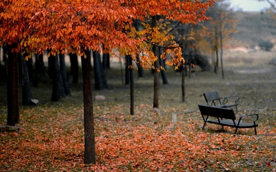 Autumn trees in the park wallpaper