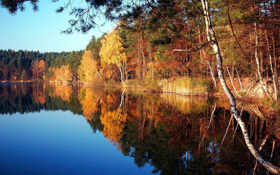 Autumn trees on the lake side wallpaper
