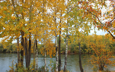 Autumn trees on the river side wallpaper