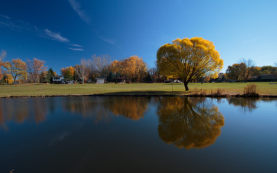 Autumn trees reflecting in the water wallpaper