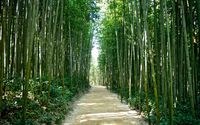 Bamboo forest in Korea wallpaper 2880x1800 jpg