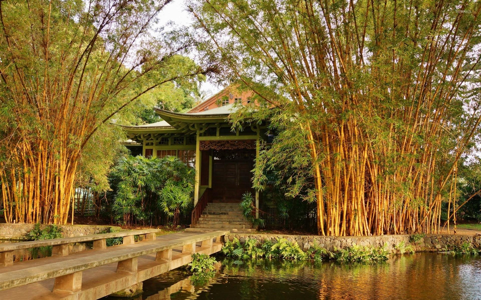Bamboo trees in a japanese garden wallpaper nature for Bamboo garden