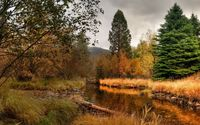 Beauty of an autumn day in the forest by the river wallpaper 1920x1200 jpg