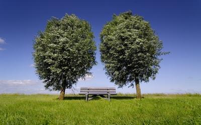 Bench between green trees Wallpaper