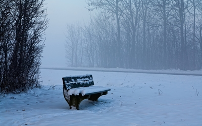 Bench in the foggy forest wallpaper