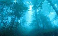 Blue light in the foggy forest wallpaper 2560x1600 jpg