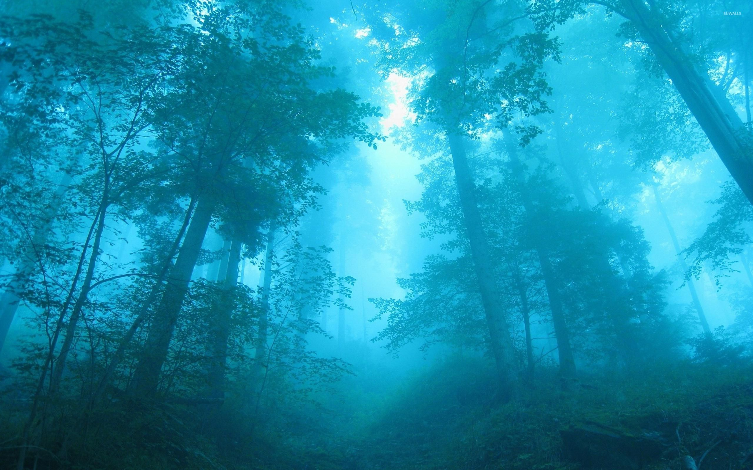Blue Light In The Foggy Forest Wallpaper Nature