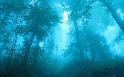 Blue light in the foggy forest wallpaper