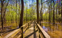 Bridge above the forest swamp wallpaper 1920x1200 jpg