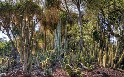 Cactuses [2] wallpaper