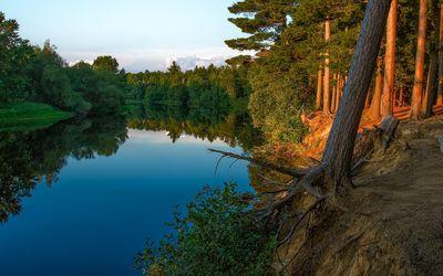 Calm river splitting the forest wallpaper