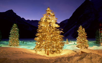 Christmas trees in the snowy nature Wallpaper