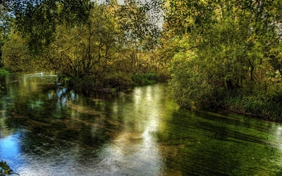 Clear river in the forest wallpaper