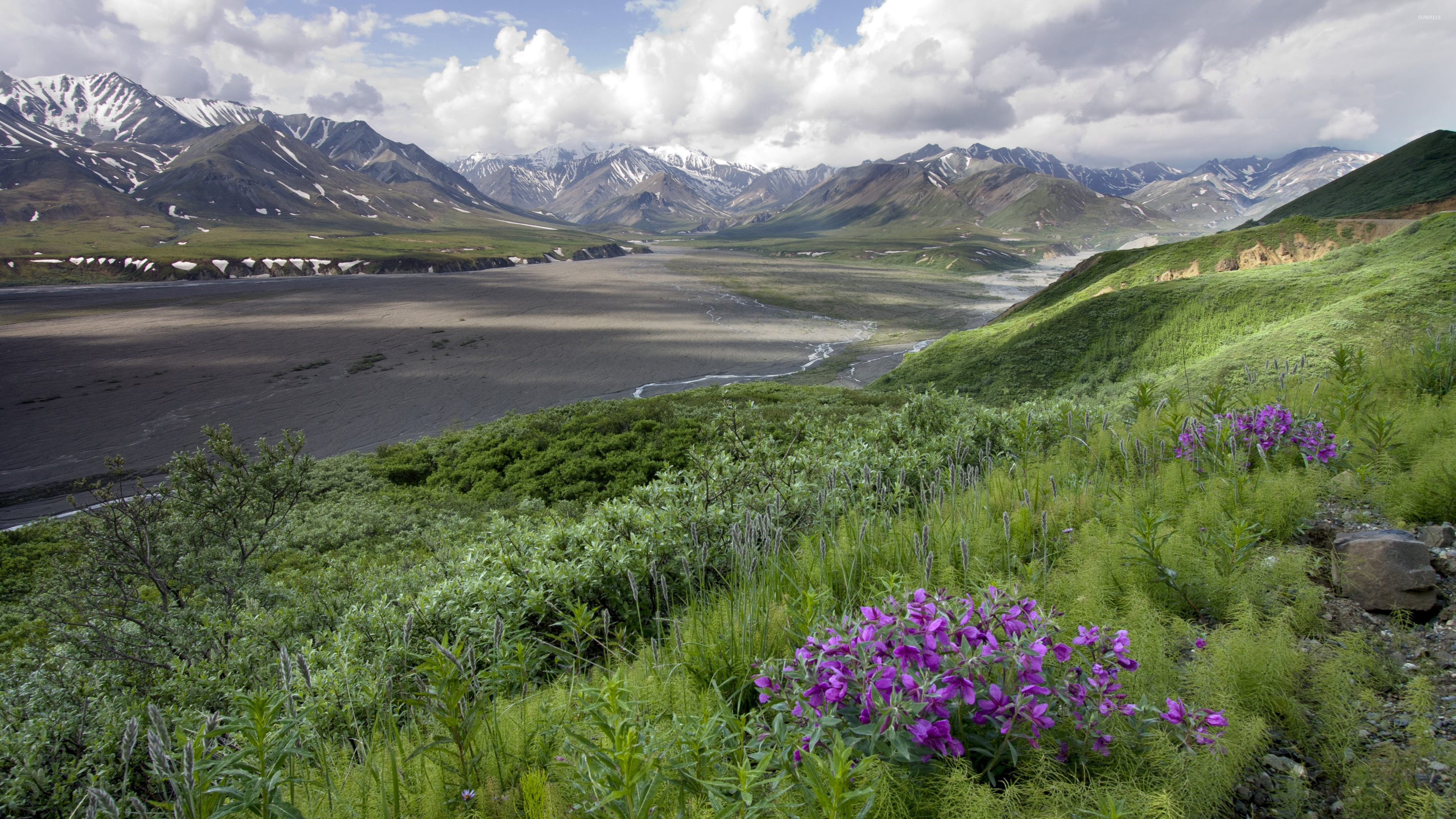 горы растительность русло загрузить