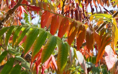 Colorful leaves in the sunshine wallpaper
