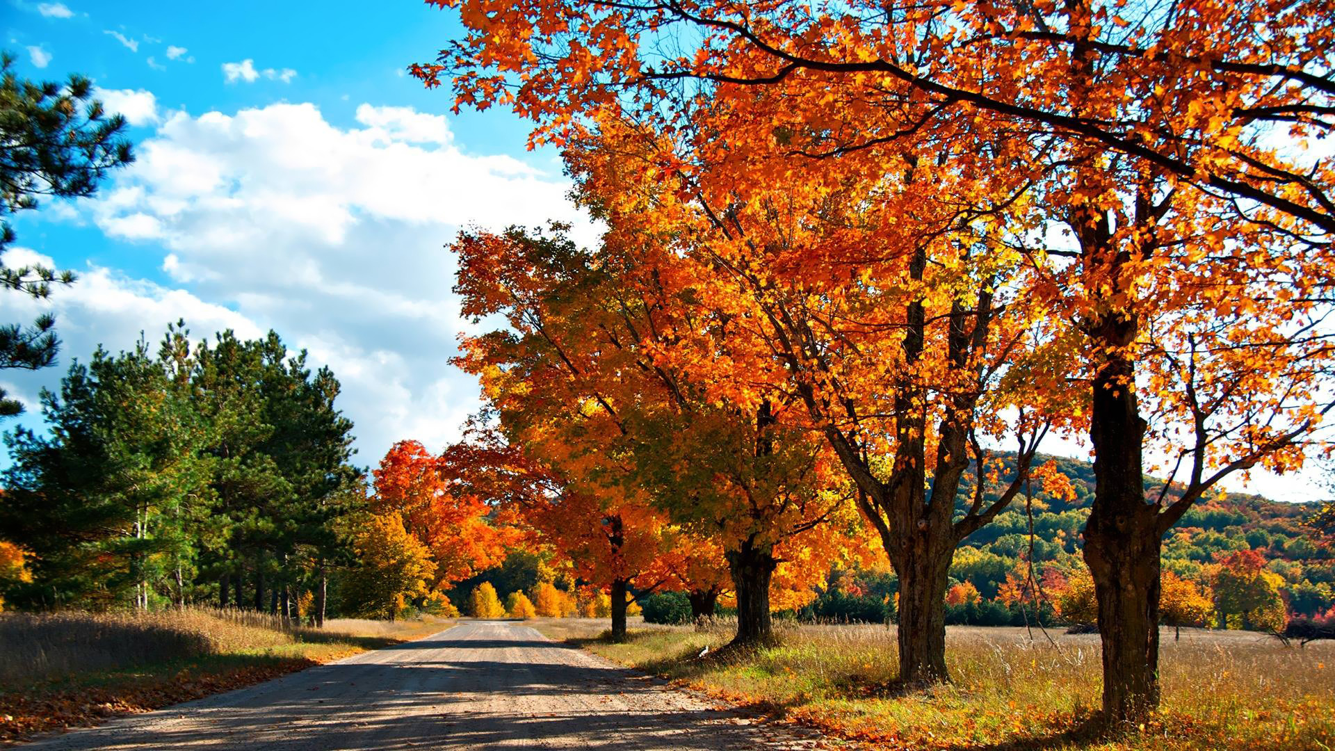 Country road wallpaper - Nature