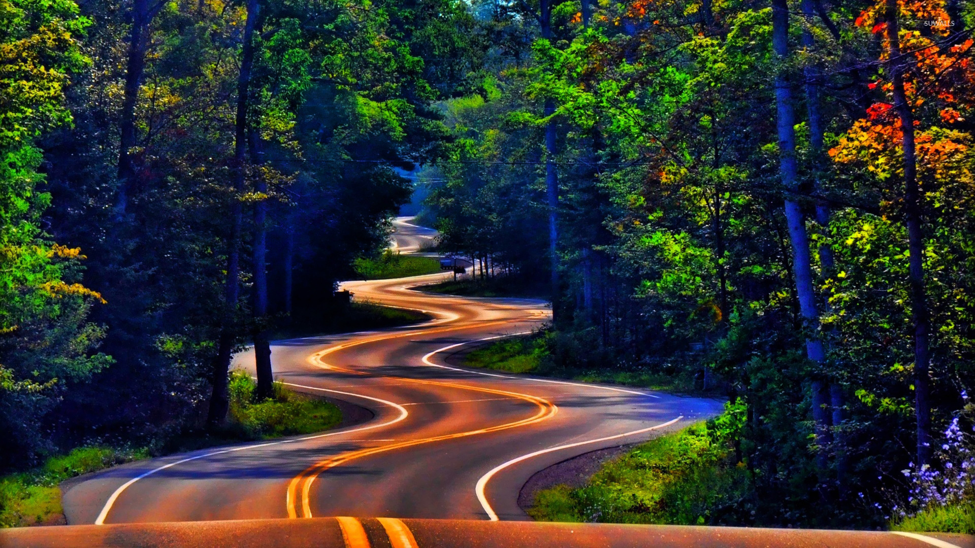 Curvy Forest Road Wallpaper