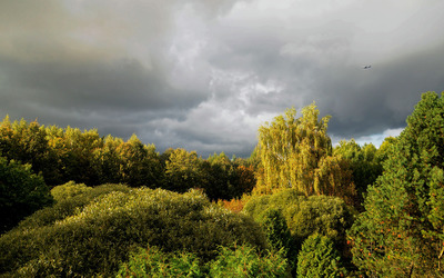 Dark clouds above the forest wallpaper