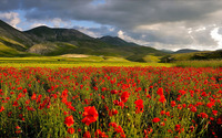 Dark clouds above the poppy field wallpaper 1920x1080 jpg