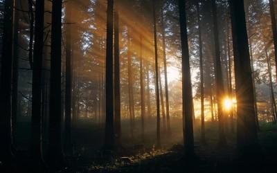 Dark trees hiding from the sun light wallpaper