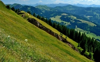 Dasies on the green hills near a ppine forest wallpaper 3840x2160 jpg