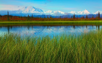 Denali National Park and Preserve wallpaper