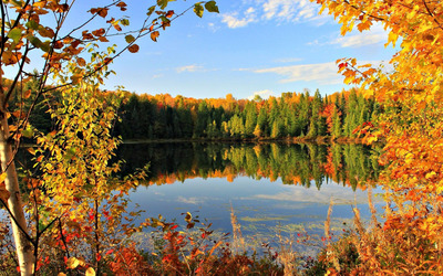 Different shades of autumn wallpaper