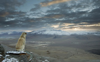 Dog overlooking the Himalayas wallpaper 1920x1200 jpg