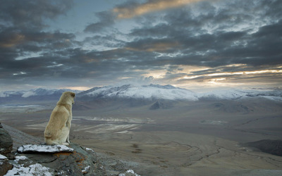 Dog overlooking the Himalayas wallpaper