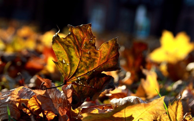 Dry Autumn Leaves wallpaper