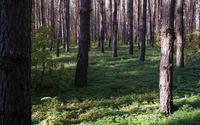 Dry forest wallpaper 2560x1440 jpg