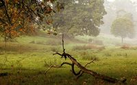 Dry tree log on the foggy field wallpaper 1920x1080 jpg