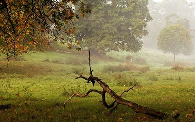 Dry tree log on the foggy field wallpaper