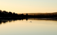 Ducks on the lake at sunset wallpaper 1920x1200 jpg