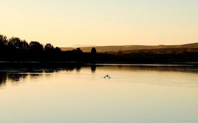 Ducks on the lake at sunset wallpaper