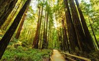 Fenced road through the redwood trees wallpaper 1920x1080 jpg