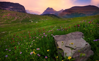 Field of flowers by the mountains wallpaper