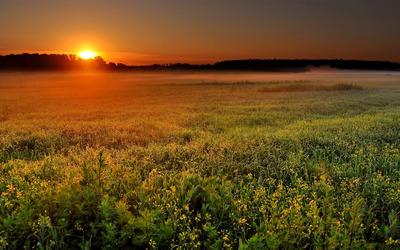 Field sunset wallpaper